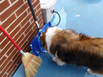 Interesting smells on this shovel, Mama!