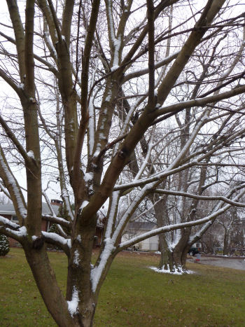 These tress are probably wondering where Spring is!
