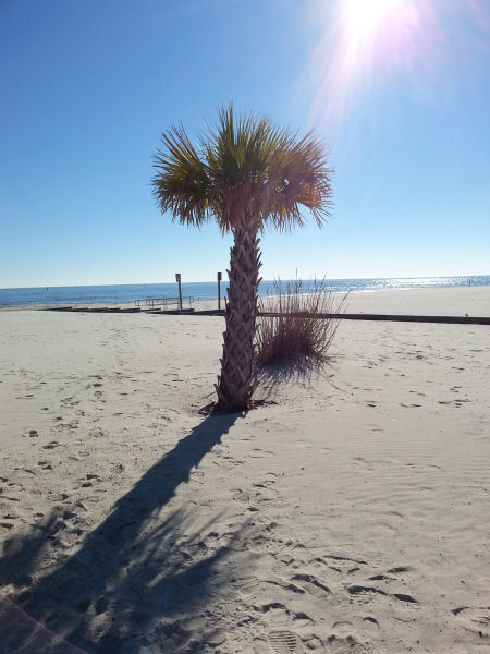 Palm tree in the sand