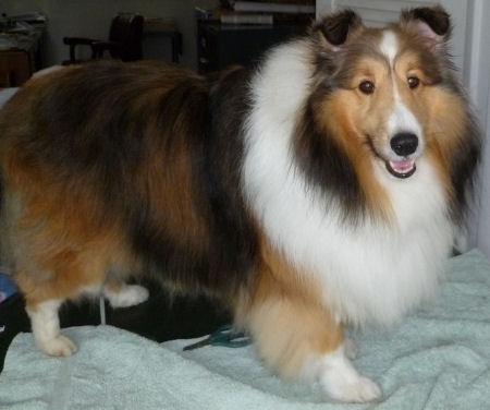 Freshly brushed dog