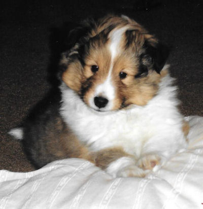 Dallas at 6 1/2 weeks, before I even brought him home