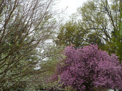 Flowering trees -- pretty to look at, but Ah-Choo!!