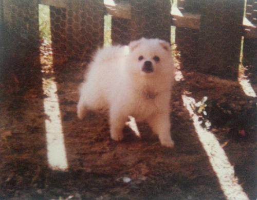 Benji as a pup