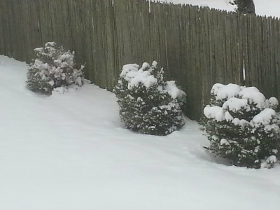 snow_bushes16