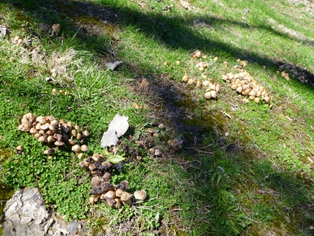 Who invited Mushrooms to the party??