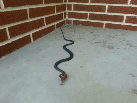 fake_snake