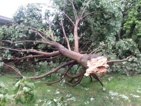 tree_again