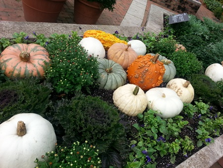 Pumpkins -- not growing like this, but merely for display purposes