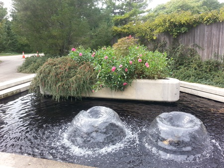 These plants seem to like bubbling fountains.