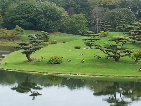 Bonsai trees, geese, greenery, and water